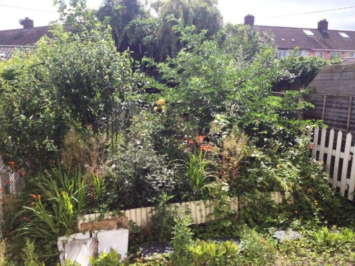 Garden in July 2016