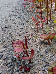 Seedlings in asphalt