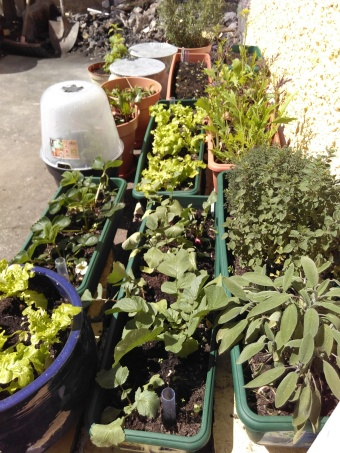 Lettuce, radishes, herbs, beetroot, strawberries, carrots... all soaking up the sunshine