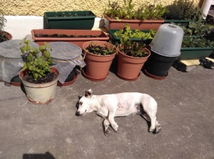 Alternating between sunbathing and cooling off in the shade