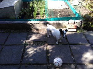 Patch has had enough gardening