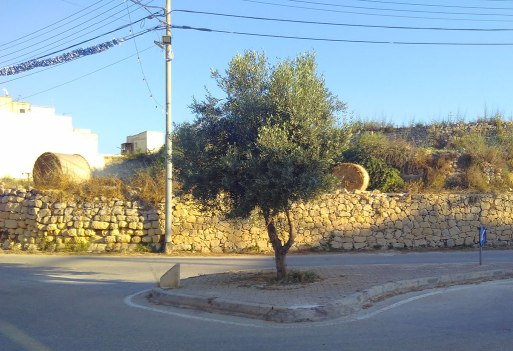 olive tree crossroads
