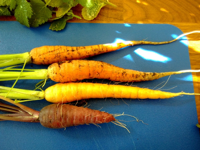 Heritage carrot varieties.
