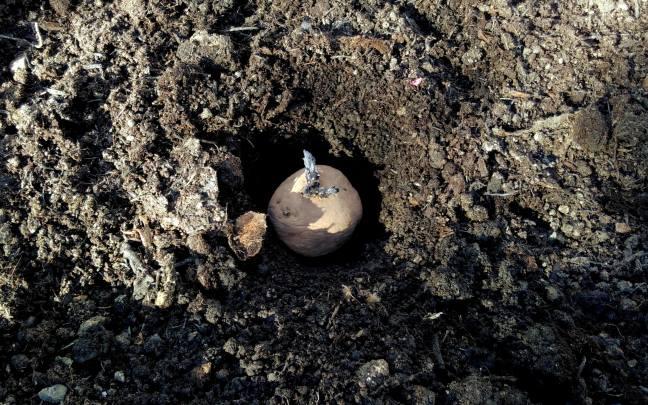 potato-in-hole