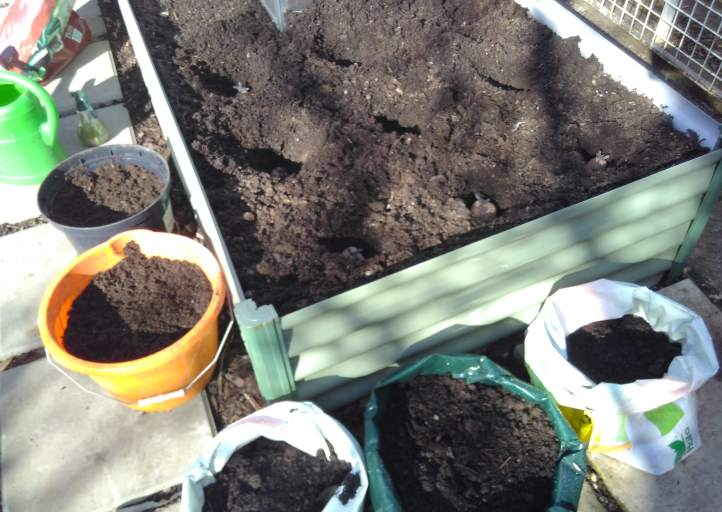 sowing-potatoes