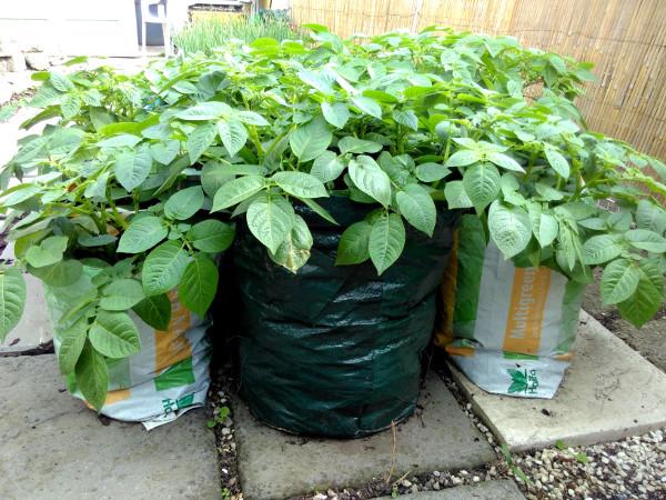 potato-bags-may-18