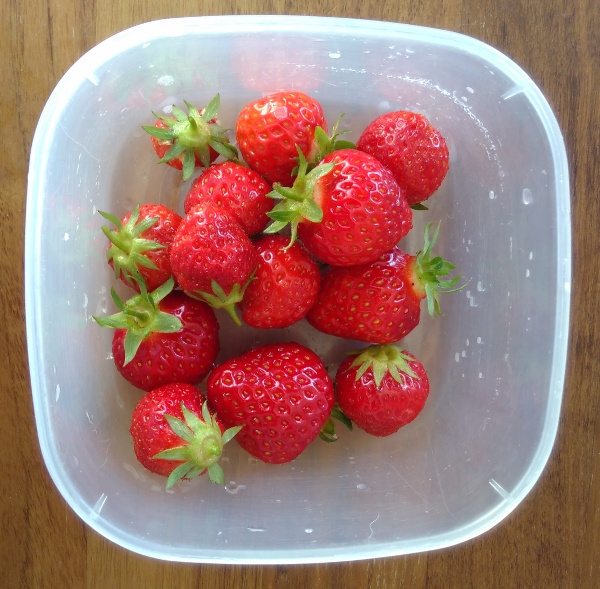 strawberries-17-june