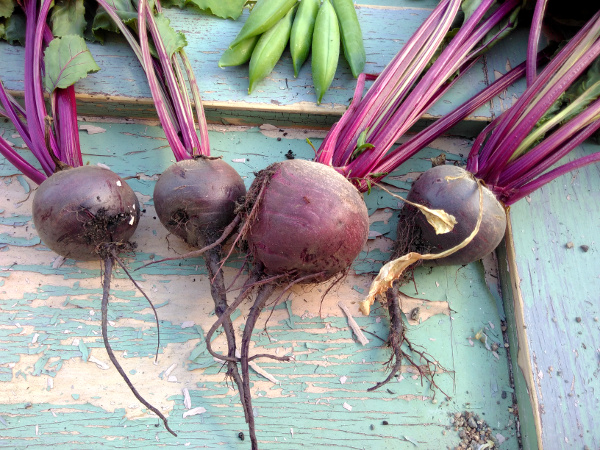 beetroot-7-july