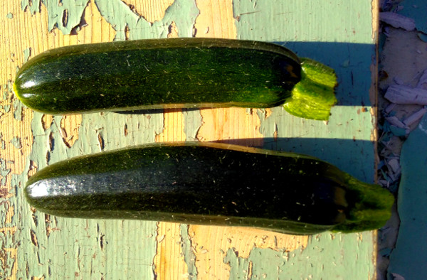 courgettes-10-july-2018