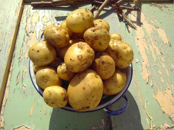 potatoes-7-july
