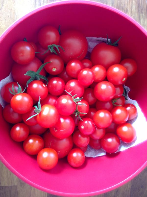tomatoes-oct-2018