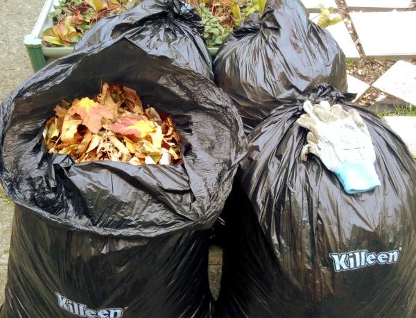 leaves-binbag
