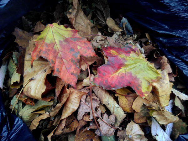 leaves-closeup