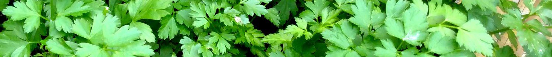 cropped-parsley.jpg