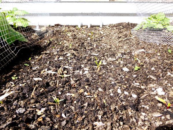 seedlings-may2-2019