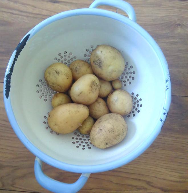 potatoes-july-2019