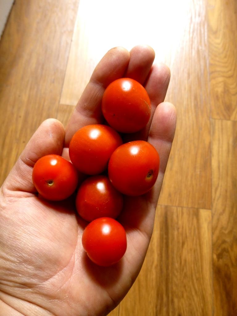 cherries-sept-2019