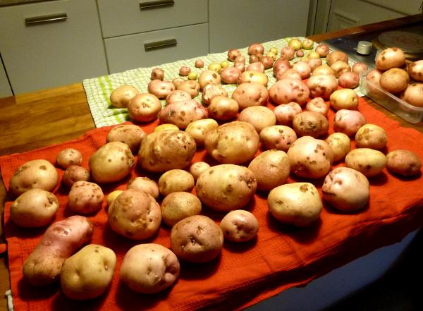 last-potatoes-sept-2019
