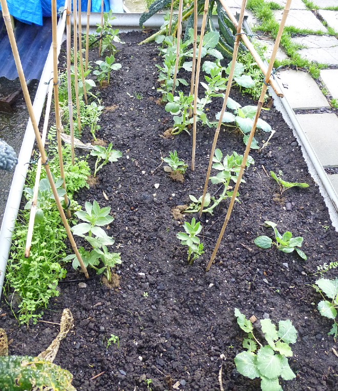 beans-and-cabbage-jan-2020 (1)