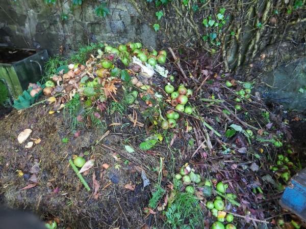 apple-compost-aug-2020